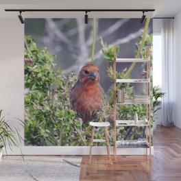 Handsome Male House Finch Wall Mural