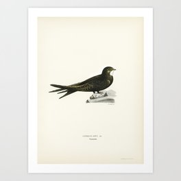 Brant Goose (Branta bernicla) illustrated by the von Wright brothers Art Print