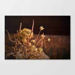 Straw Flower Canvas Print