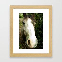 nosey  Framed Art Print