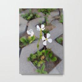 Flower in the parking lot Metal Print