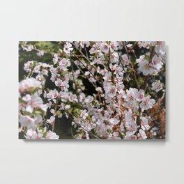 Tiny Pink Spring Blossoms Metal Print