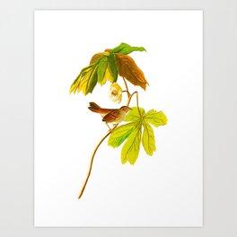 Swamp Sparrow Art Print