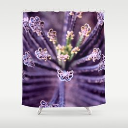 Purple Euphorbia in Detail Shower Curtain