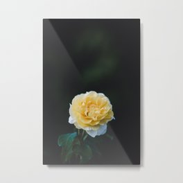 Flower Photography by Jason Leung Metal Print