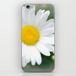 Daisies flowers in painting style 1 iPhone Skin