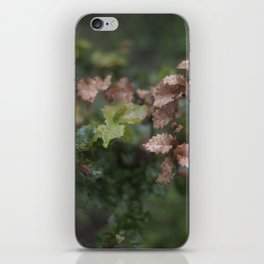 Oak Leaves iPhone Skin