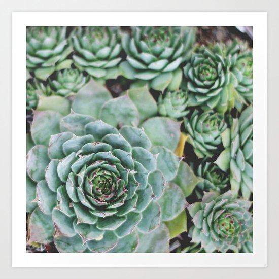 Succulents I Art Print