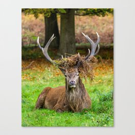 Majestic. Canvas Print