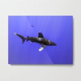 Oceanic Whitetip and Pilot Fish Metal Print