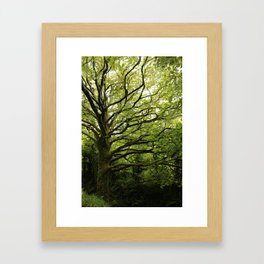 Tree in a Fairy Ring Framed Art Print