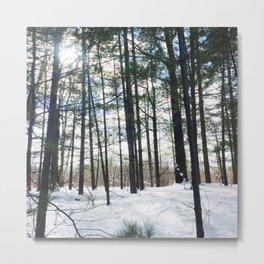 Winter Woods1 Metal Print