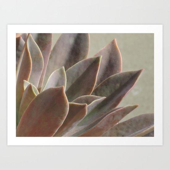 TEXTURES: Succulent Looks East Art Print