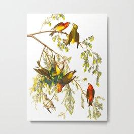 American Crossbill Vintage Bird Illustration Metal Print