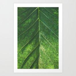 Botanical Gardens Leaf #101 Art Print
