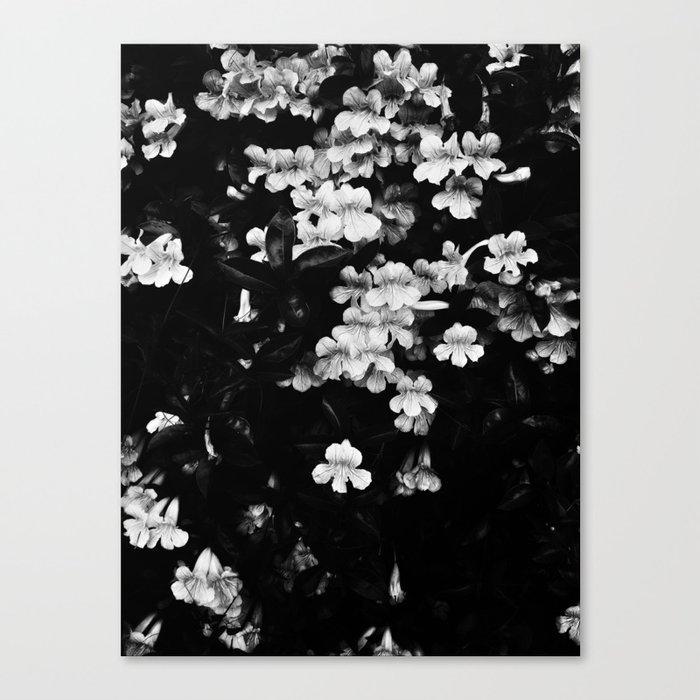 Trumpet Flowers (Black & White) Leinwanddruck