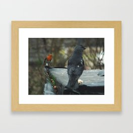 Curious robin eyeing up a jackdaw Framed Art Print
