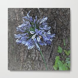 Blue Agapanthus Flower Metal Print