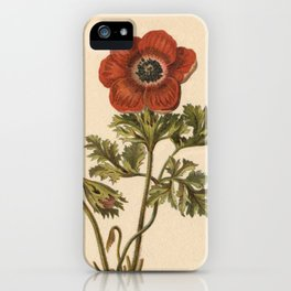 1800s Encyclopedia Lithograph of Anemone Flower iPhone Case