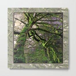 GREAT RAINFOREST MAPLE TREE Metal Print