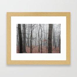 Woods on a Foggy Sunday Stroll Framed Art Print