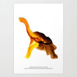 Fernandina Galápagos Tortoise Art Print
