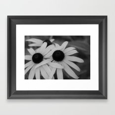Black eyed susan 02 Framed Art Print