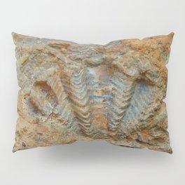 Shell Fossil Pillow Sham