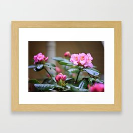 Pretty in Pink2 Framed Art Print
