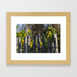 Yellow flower and wood fence Framed Art Print