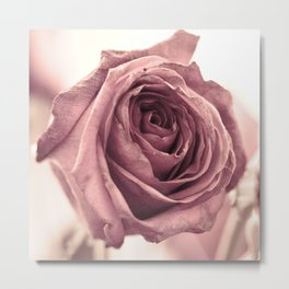 Dusky Rose, 2 Metal Print