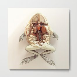 The Anatomical Frog Metal Print
