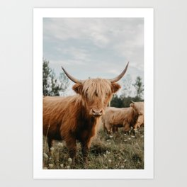 Highland Cow In The Country Art Print