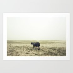 Lonely black sheep Art Print