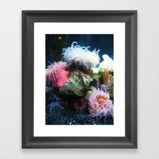 Anemone 2 Framed Art Print