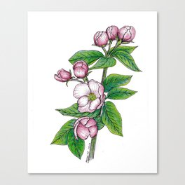 Apple Blossoms, floral art, flower drawing, pink spring flowers on white background Canvas Print