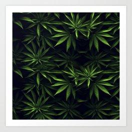 Weed leafs - Cannabis field Art Print