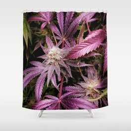 Medicine Shower Curtains