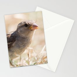 Native field sparrow, Passeridae Stationery Cards