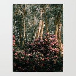Spring at Holme Fen Poster