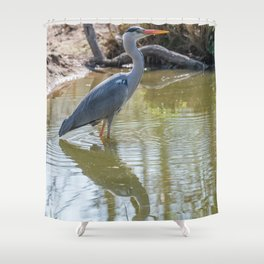 Gray heron reflected in the water of the pond Shower Curtain