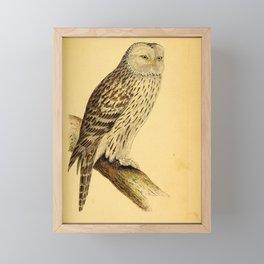 Vintage Print - A History of the Birds of Europe (1859) - Ural Owl Framed Mini Art Print