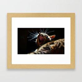 Yawning Kitten Framed Art Print
