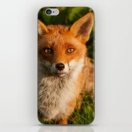 British Red Fox iPhone Skin