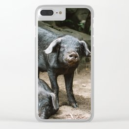 Pigs Basking in the Sun Clear iPhone Case