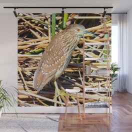 Russet Colored Eyes Wall Mural