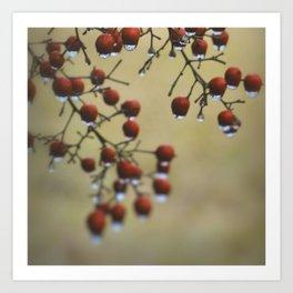 Wet Berries 1 Art Print