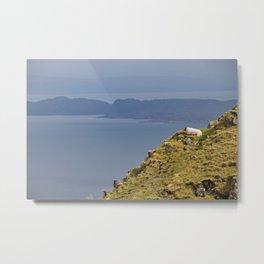 Wild sheep Metal Print