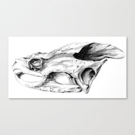 Snapping Turtle Skull Canvas Print
