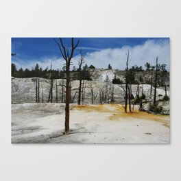 Incredible colors of Mammoth Terraces, Yellowstone Canvas Print